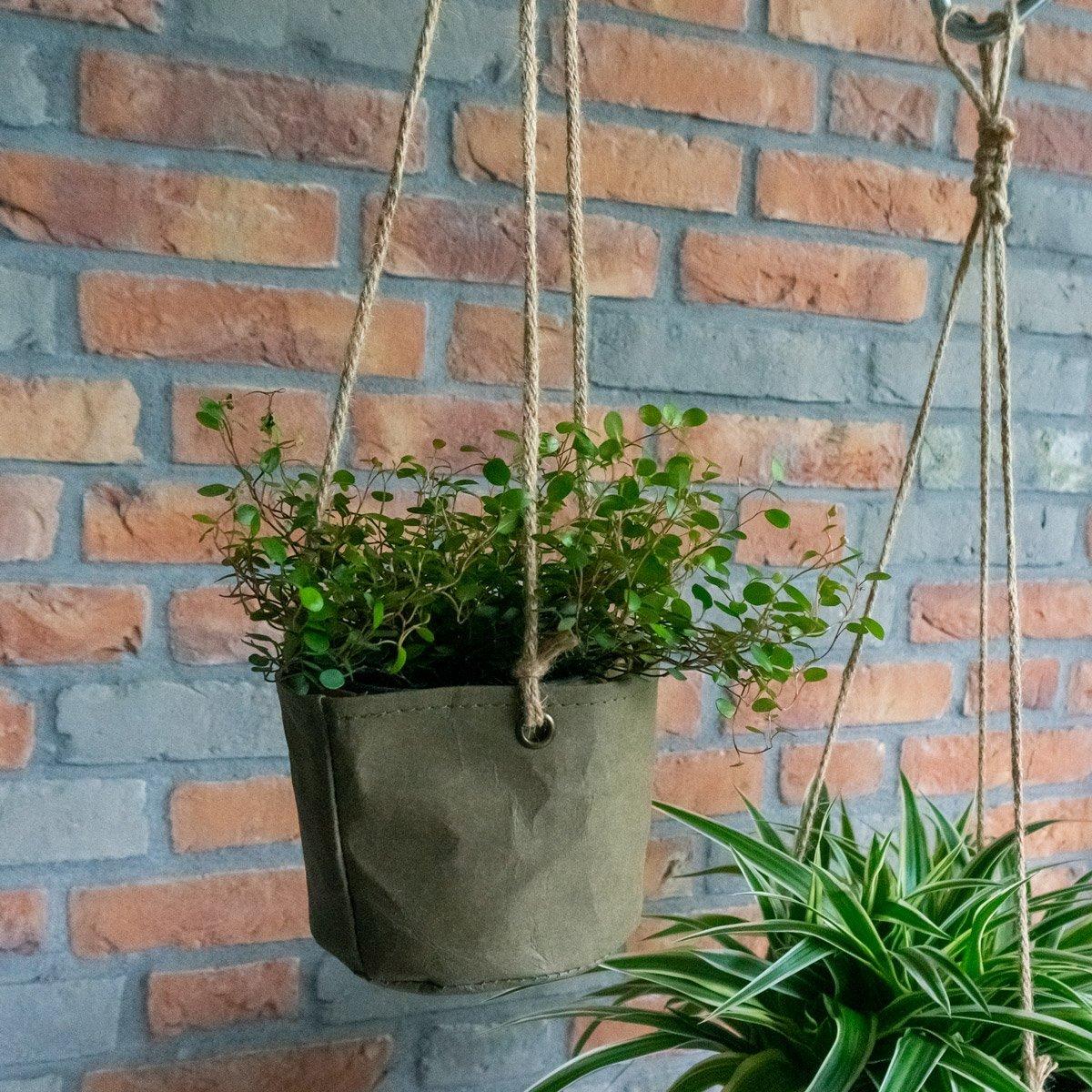 Plant & Bloempotten